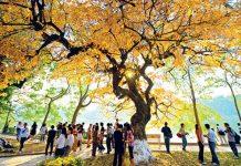 Du lịch Hà Nội mùa thu