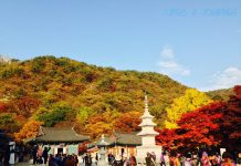 Kinh nghiệm du lịch Hàn Quốc