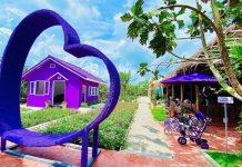Check in góc sống ảo tuyệt vời tại ngôi nhà màu tím tại Cần Thơ